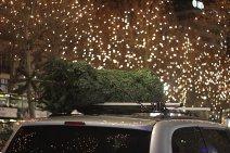 Wo kann man Weihnachtsbäume kaufen?