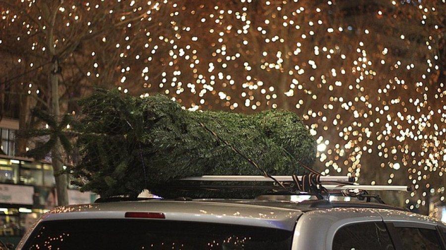 Weihnachtsbäume kaufen nicht ohne Auto-Transport